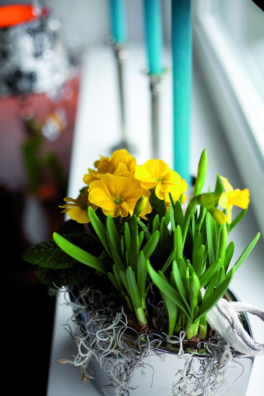 Z miłości do... Holandii - dom w wiosennym nastroju