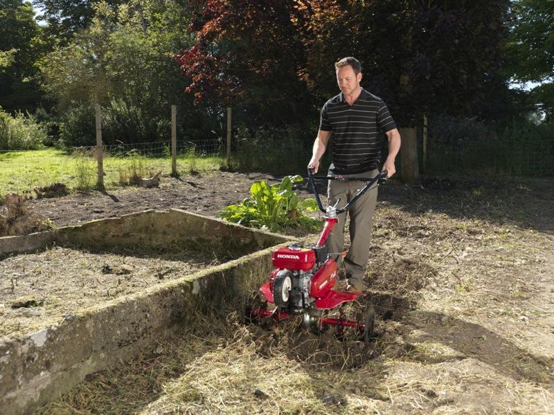 Efektowny trawnik – praktyczne porady ekspertów