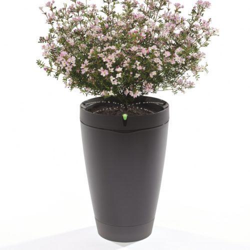 parrot-pot_black-plant-1