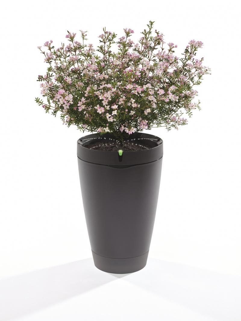 Parrot Pot. Inteligentna doniczka podleje kwiaty za Ciebie!