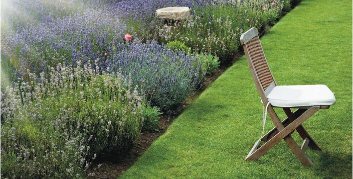 Sekrety pięknej trawy