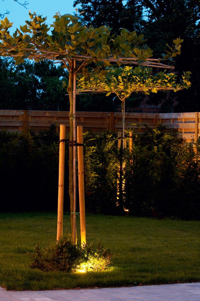Świetlne iluzje ogrodowe
