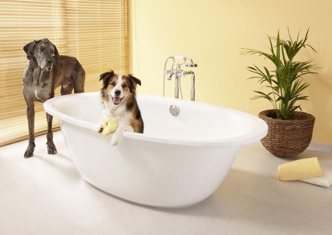Wykąp psa, ocal łazienkę - radzi Kaldewei