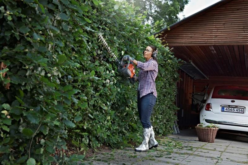 Żywopłot na medal – zielona brama Twojego domu