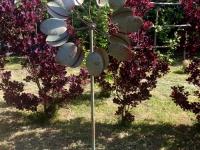 rzec5baba-wiatrowa-wisley-sp460-aurora-garden